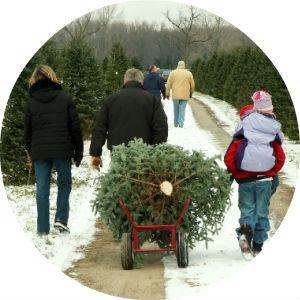 Family Dragging Cut Christmas Tree Down Snowy Road at Christmas Tree Farm