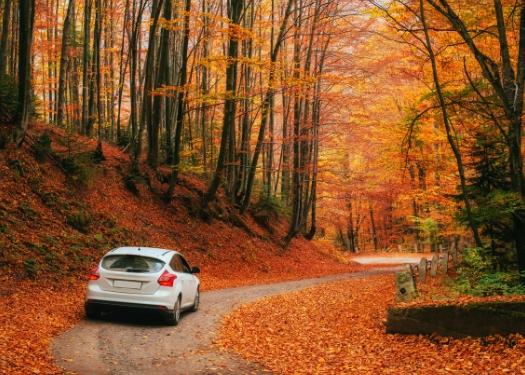 car driving through leaves
